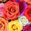Поздравляю всех женщин с 8 марта!!!