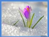 Поздравление с 8 марта!!!